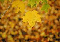 在大連的秋天,要做完這些事才夠浪漫!
