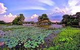 點點攝影:稻田夕陽