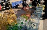 偶遇農村大集賣鳥攤 貴的一隻上千元有的不認識 你見過嗎