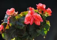 """養花,掌握""""6個技巧"""",枝繁葉茂、花開爆盆,養花大神沒得說"""