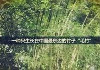 竹子成長的啟示(很震撼)