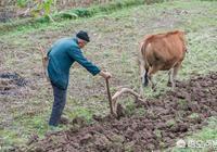 農村有一個怪象,有些農村人臨近60歲,為何還會選擇外出打工呢?