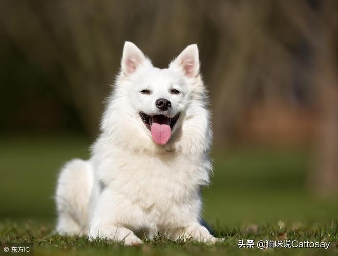 有一種治癒叫犬萌,狗狗的笑容暖化你,笑起來的狗狗最迷人