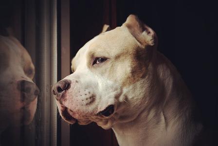 狗狗能不能吃鹽,為什麼說狗狗不能吃鹽,會有哪些危害嗎
