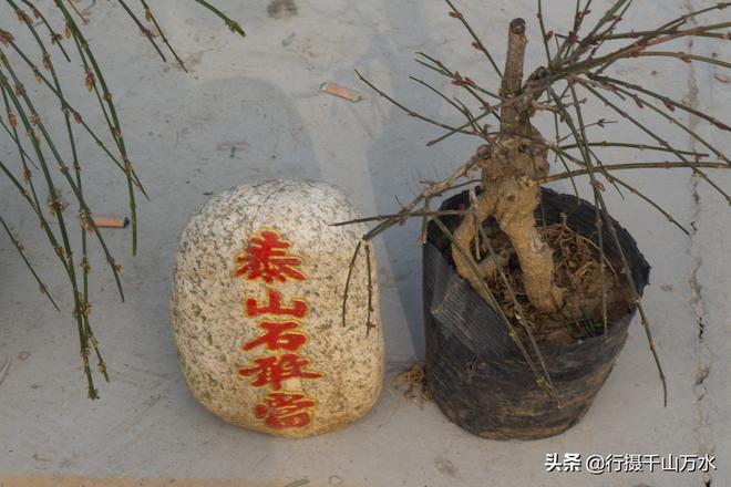 農村大集上石頭和樹根也成了商品,會有人買嗎?
