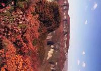 武安是個好地方,秋到武安看紅葉!