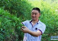 """雲南魯甸:光明村的""""光明""""產業"""