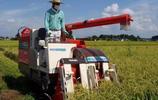 8張圖告訴你日本農民一年掙多少錢?30萬人民幣算很一般的!