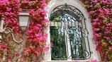 唯美浪漫的爬藤花卉植物,讓你的陽臺瞬間變成小花園
