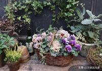 """盆栽花園!用三色堇完成一場不可思議的""""森林舞會"""""""