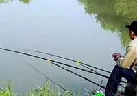 春末釣鯽,窩料中有這之後,發窩慢不說,鯽魚還不容易進窩