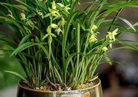 """給蘭花吃這2種""""料"""",長勢好,花開快,家裡有就別扔了"""