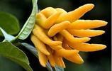 如果家中有空地,一定要種上這4種植物,好養還好看,隨吃隨摘