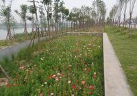 亳州渦河城區風光