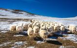 內蒙古索倫鎮,牛糞堆成了大山,從這堆牛糞你能猜出養了多少牛嗎