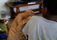 軍訓回來,臉被晒成黑炭,家裡的二貨貓盯著我足足看了十分鐘!