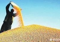 有人說不進口美國的玉米、大豆等糧食,國內的糧食價格就會出現大幅度上漲,這是真的嗎?
