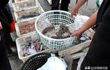 漁船歸來 市民扎堆搶購小海鮮 蠣蝦15元一斤 小雜魚不用秤大把抓