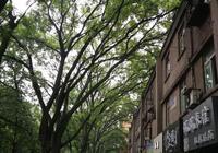 西安東郊有條綠樹蓋過樓房的一條街,街上還有家忒好吃的米線店