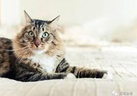 貓咪頭號殺手:腎衰竭
