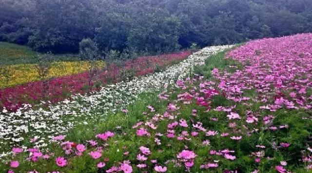"""鮮花、溪水、幽谷,西安往北2h這裡有個""""花花世界"""""""