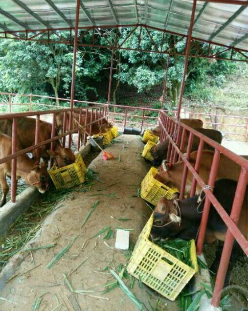 大家好,想在老家搞養殖,我計劃想養驢或者牛?。大家給個建議,開始怎該怎麼幹?