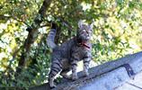 動物圖集:可愛的虎斑貓