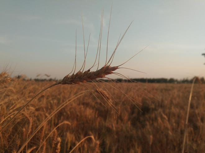 又是一年秋忙時——鄉村紀實