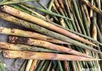 農村的楠竹大筍與其它的小竹筍比較起來,你更喜歡吃哪一種筍?