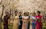 櫻花節上的旗袍秀