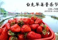鎮江句容白兔草莓音樂節