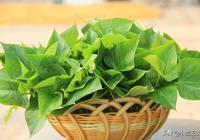 小盟三農:城市裡的蔬菜皇后?對人體健康極好?地瓜葉的逆襲