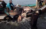 揭祕印尼血腥魚翅交易:漁民殘忍的捕殺鯊魚,魚翅可以鋪滿樓頂