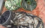 秋季釣魚用蚯蚓,掌握這三個方法,掌握讓你享受垂釣輕鬆爆護