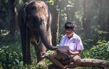 一組人與大象的和諧美圖,大象真是有靈性!