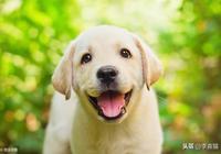 闢謠:狗狗的分離焦慮不像表面上那麼簡單,有時逆向解決才更有效