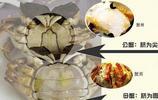 想吃最肥的螃蟹,但是不會挑公母?小編告訴你最詳細的選蟹方法