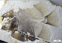 發現了侏羅紀時期的「食人魚」