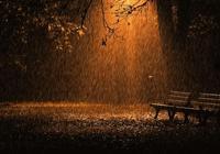 詩歌《雨夜情思》文/阿蘭