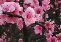 人生如花,淡者香