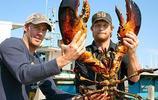 動物世界:美洲螯龍蝦
