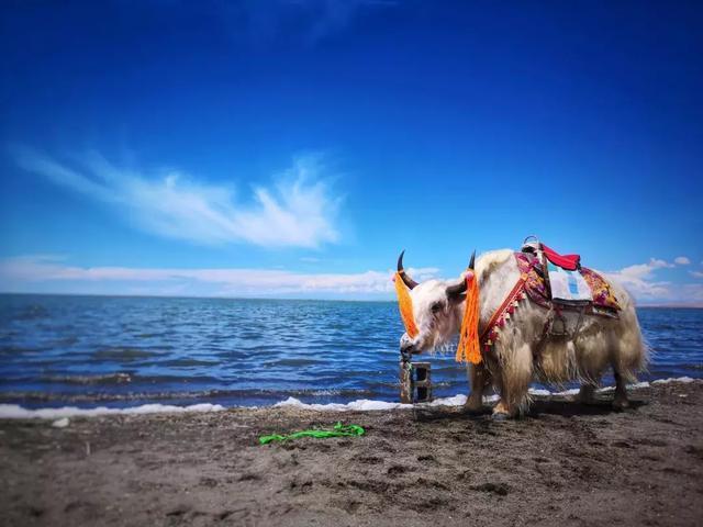 金秋來啦,你不得不學的手機攝影技巧,教你在河、湖拍出大片!
