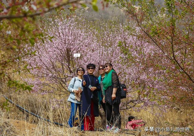 山東農村美麗景色吸引遊客,景區小生意場面火爆,一天賣上萬元
