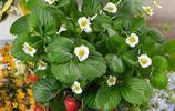 家裡如果有空地,一定要種上這4種植物,好看還好養,想吃就摘