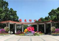 秋花絢——廣州市首屆簕杜鵑花展亮相流花湖公園
