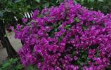 這些花卉不但好看還十分好養活,養花新手再也不怕養不活它了