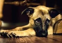 狗狗很怕這10件事,你家佔幾個呢?