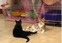 店裡突然失火,主人為了救貓咪,竟獨自闖進大火中,結局讓人感動