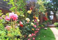 這6種花,打造出一個漂亮超美的院子,花量驚人,一看就入迷