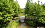 """""""五一""""節到,湖北宜昌運河公園景色美,水杉、睡蓮吸引遊人觀光"""